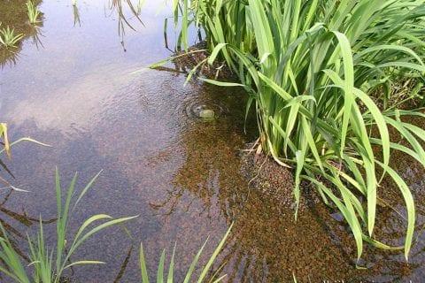 lavafilter-met-beplanting