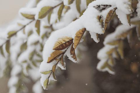 Is uw tuin al winterklaar? Wij helpen u!