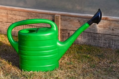 Langdurige droogte: zo blijft uw tuin mooi