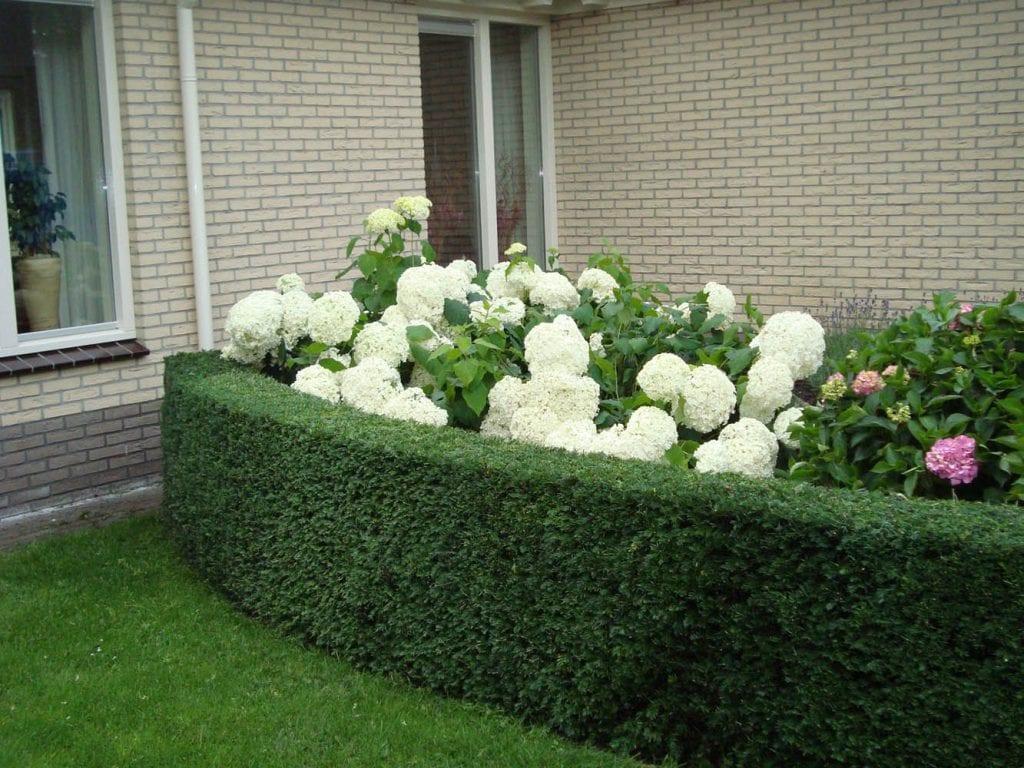 Haag snoeien tuinonderhoud
