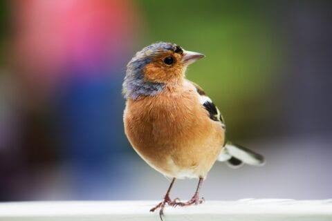 Vogels in uw tuin houden!