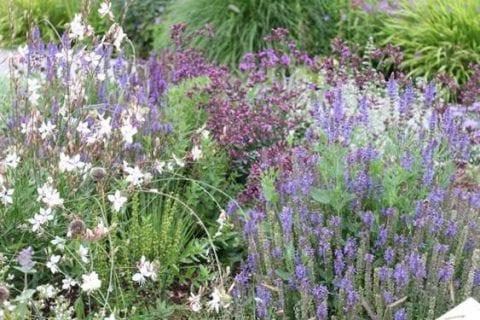 Prairiebeplanting: prachtige kleuren, onderhoudsarm en natuurlijk!